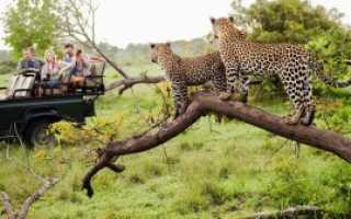 Отдых в ЮАР: особенности и преимущества