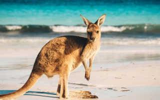 Австралия: что посмотреть и куда сходить